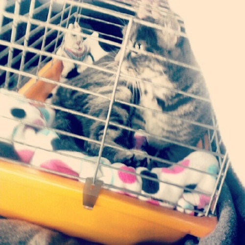 On the way to the #vet. For a very #sick cat, he was such a #good #boy. #miss you already #dickie! :( see you on #sunday. Hope your #surgery is smooth, quick, ands you aren't scared. You'll be home soon enough ♥ (Taken with Instagram)