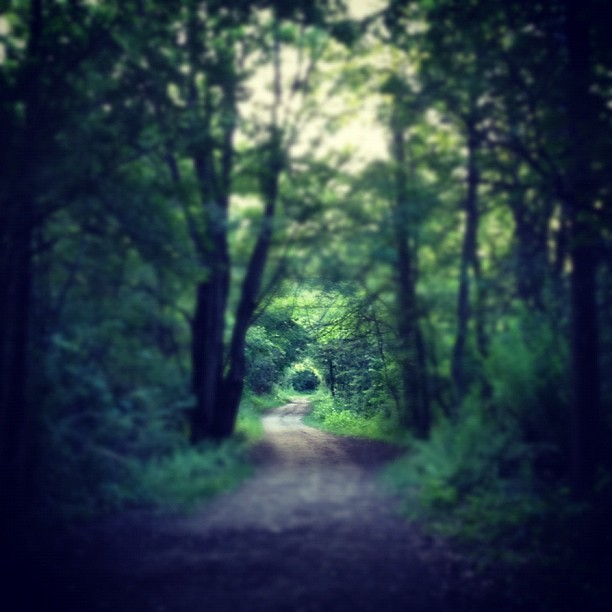 #park #path #wild (Taken with Instagram at Wildwood Preserve Metropark)
