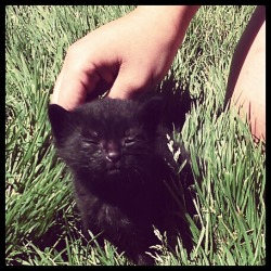 xlove-and-rocketsx:  Come home with me, baby kitten the size of my hand. I'll take care of you or any of your brothers/sisters. LET ME LOVE YOU.<3333