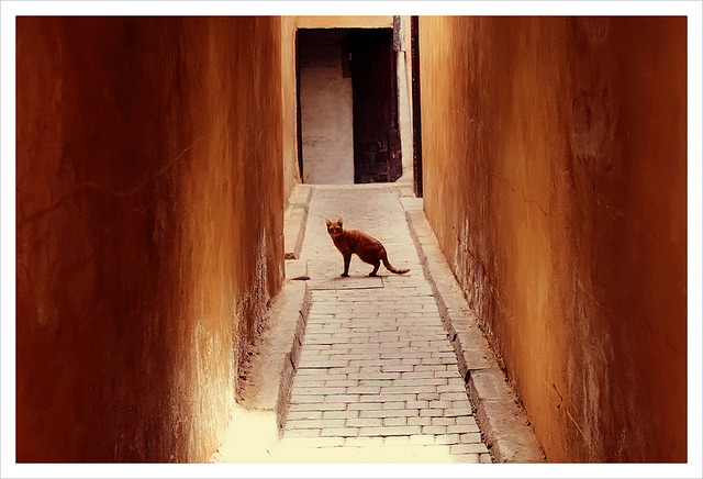 | ♕ |  Lost in a timeless passage - Fez, Morocco  | by © maяtina