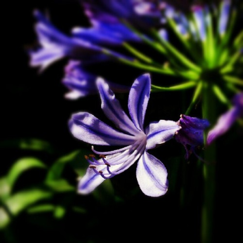 Purple #macro #flower  (Taken with Instagram)