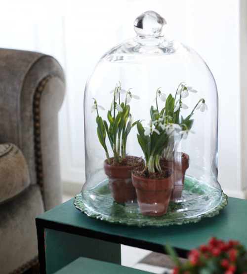 melodysmuse:  Easy Tabletop Touch Bring the garden inside — create a mini tabletop terrarium beneath a pretty cloche. Here, a small glass cloche is also a practical way to protect potted plants from being knocked over.