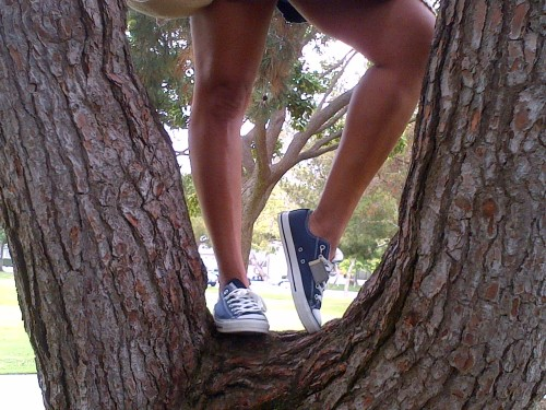 Tree climbing in Converse and a dress. Cloverfield Park, Santa Monica, Ca