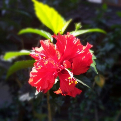 Red #macro #flower  (Taken with Instagram)
