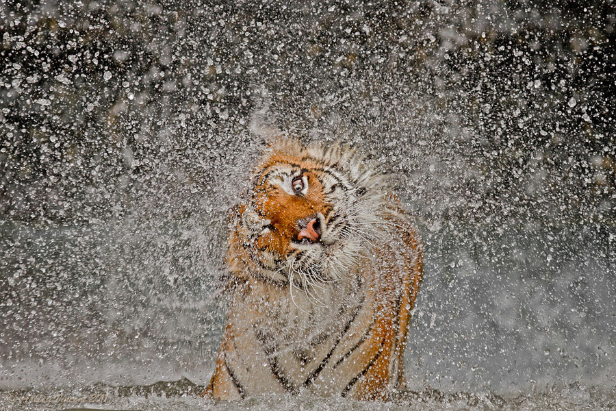 theanimalblog:  (by Ashley Vincent)