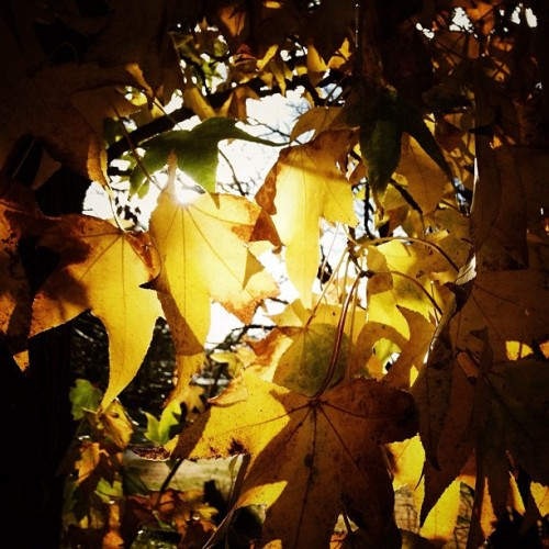 …And it was all yellow.  (Taken with Instagram)