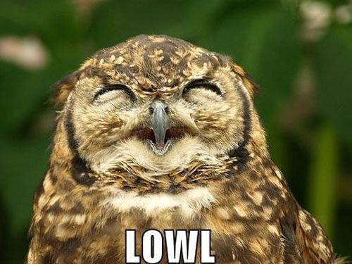 Haha owls are just so damn expressive, I love 'em.