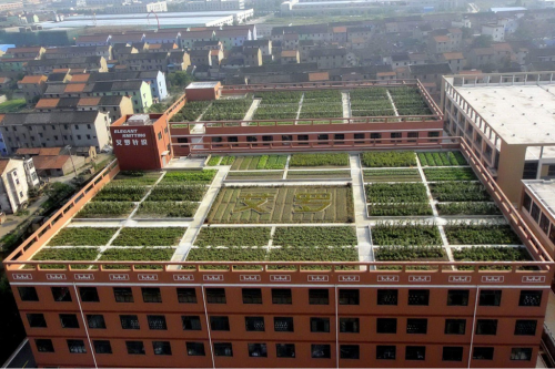 Vegetables grown on factory roof for use in worker canteen  Vegetables are seen growing on the roof of a factory in Shaoxing, eastern China's Zhejiang Province. Ailuo garment factory planted more than 40 varieties of vegetables on its 4,800 sqm workshop roofs. The harvest is enough to produce meals for all 200 workers in the factory canteen.  Read more…