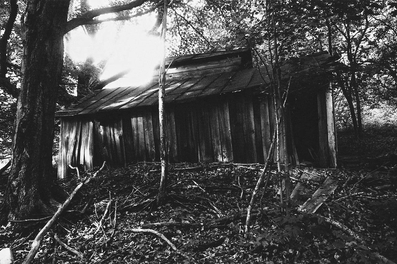 Abandoned 100 year old sugar shack in the woods  C.F.B.