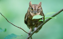 dendroica:  An owl tilts its head and gives a birdwatcher a cheeky wink in a forest on U-am-san Mountain in Cheongju City, South Korea Picture: Jungwoo Noh / Barcroft Media (via Pictures of the day: 15 June 2012 - Telegraph)