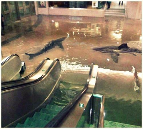 hotb0xing:  The collapse of a shark tank at The Scientific Center in Kuwait.