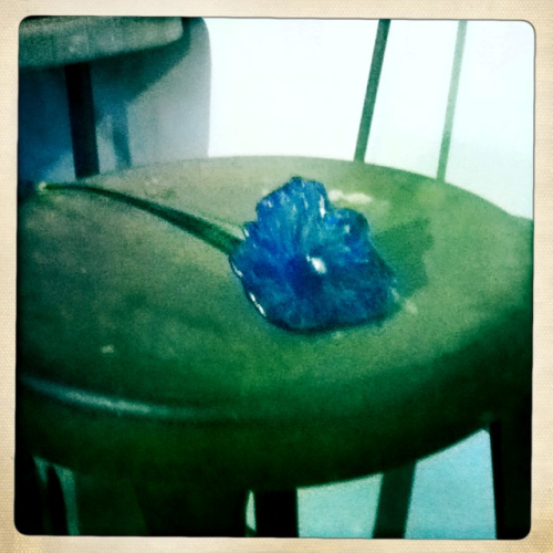 My madre makes awesome glass flowers~  Took it with hipstamatic