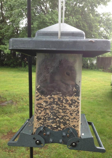 "Squirrel Stuck in Birdfeeder ""I made mistakes, but I have no regrets"" - Squirrel."