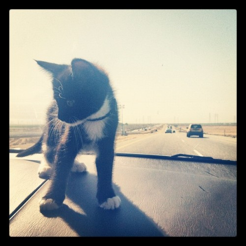 world traveler 🚀 (Taken with Instagram)