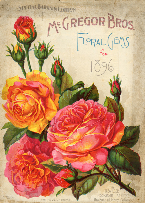 "From the McGregor Bros. catalog of Floral Gems for 1896 the ""inconstant beauty"" rose. (via Smithsonian Institution Libraries : Front Cover SIL08-09873-a)"