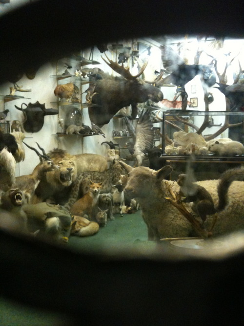 Peeping through into a taxidermist shop at night… surreal