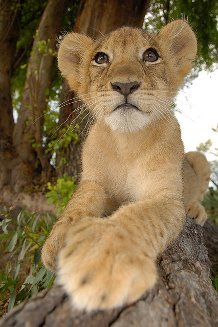 kingdom-of-animals:  regal by Marleen Lammers on Flickr.