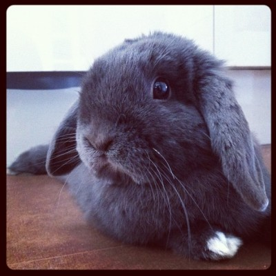 I have the cutest bunny ever. (Taken with Instagram)