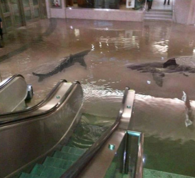 faring:   'The collapse of a shark tank at The Scientific Center in Kuwait.'  i've reblogged this so many times   Crazy.