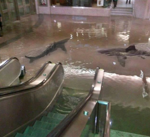 'The collapse of a shark tank at The Scientific Center in Kuwait.'