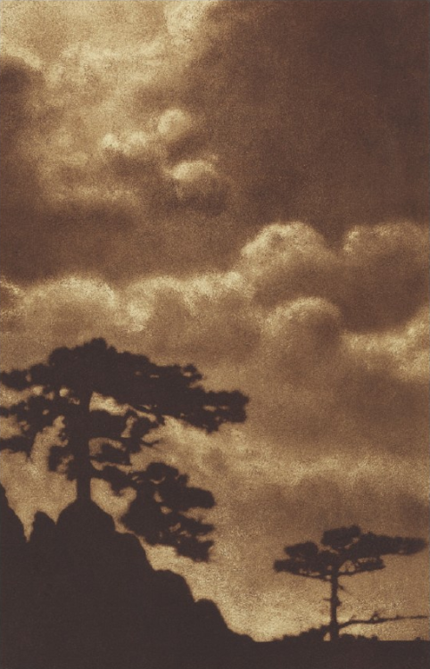 firsttimeuser:  Pines, Crimea, 1925 by Vassily Ulitin