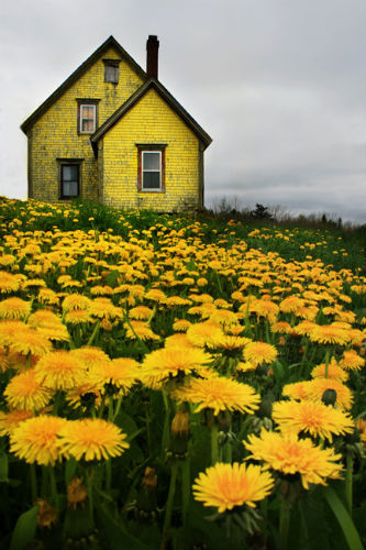 Dandelion House, Nova Scotia photo via buoybird