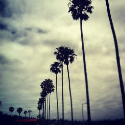 Cloudy day #trees #beach #lajolla #cloudy #nature #dark #instagram #instagood #ig #follow #like #sand #ocean (Taken with Instagram at La Jolla Shores Beach)