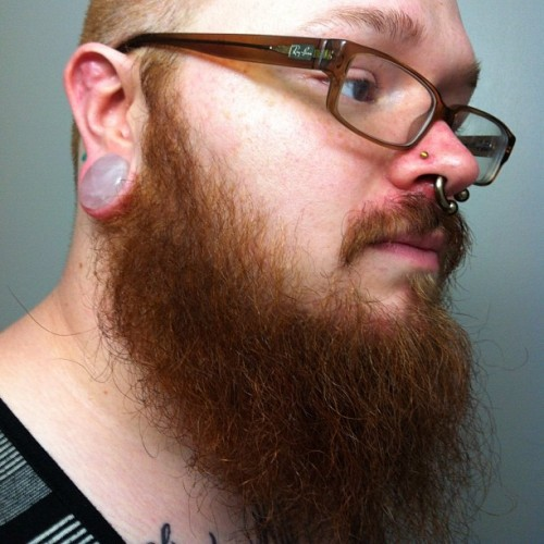 The New Rose Quartz #plugs from Diablo Organics #septum #ginger #implant #tattoos #beard  (Taken with Instagram)