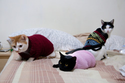 thedaintysquid:  Cats with new dress by Anpis on Flickr.