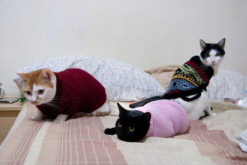 Cats with new dress by Anpis on Flickr.