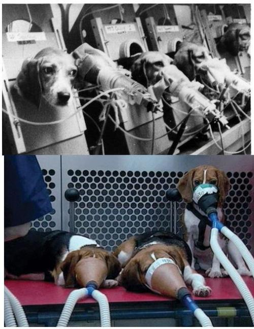 Cigarette company testing on beagles. Enjoy your cancer sticks.