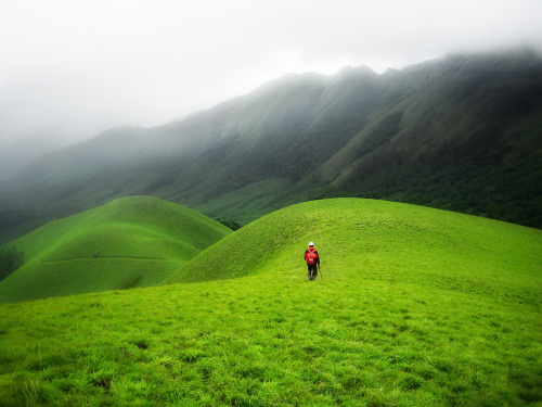 Munnar, India (by davе)