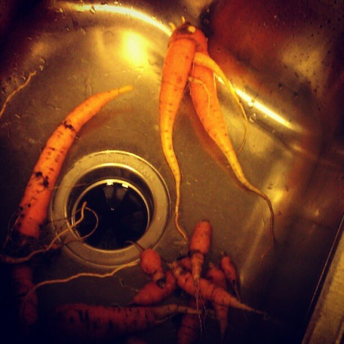 carrot growing = avatar legs (Taken with Instagram)