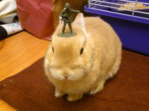 stuffonmyrabbit:  Soldier  Awww!