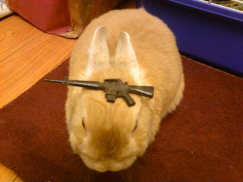 stuffonmyrabbit:  M-16