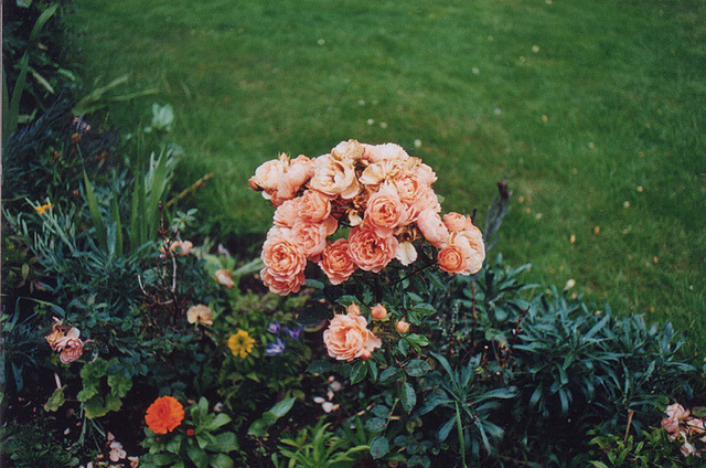 palides:  untitled by millie clinton. on Flickr.