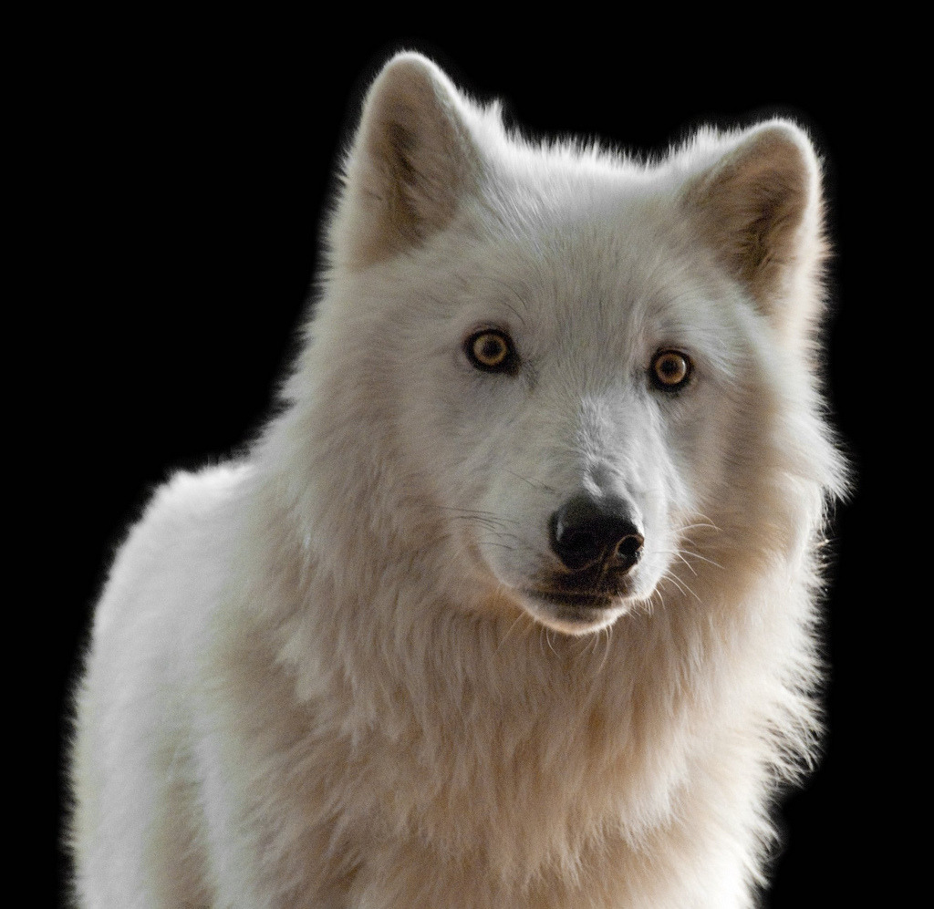 ancientdelirium:  Portrait of Atka (by jaho326)