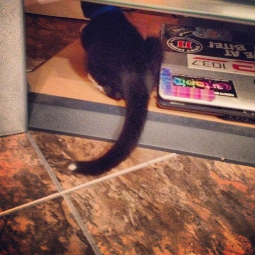 Cutest tail ever. #kitten #cat #kitty (Taken with Instagram)
