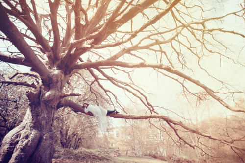 etherealogie:  The Dreamer's Tree (by Sarah Schloo)