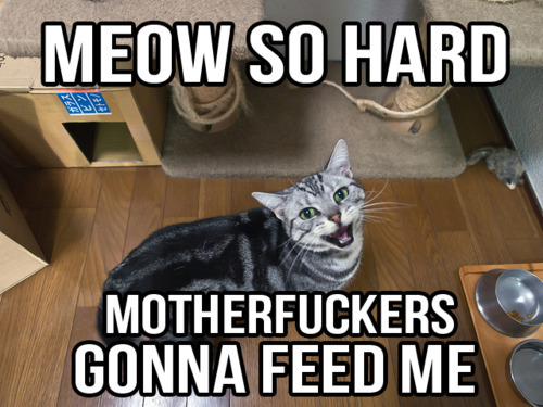 totally my cat
