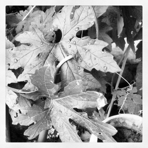 If it isn't the rain ;) #rain #nature #blackandwhite (Taken with Instagram)