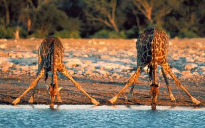 Giraffes, Kenya. Follow our blog. New travel photos posted daily. We always follow back!