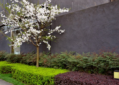 Day 22 - Trees(30 Day Photo Challenge)  In front of Chengdu's Museum of Modern Art.