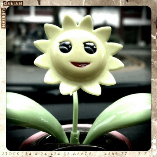 #sunflower #flower #cute #smile (Taken with Instagram)
