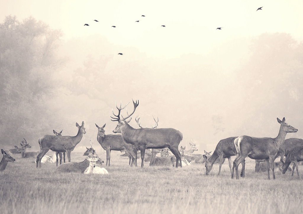 spidercamp:  … my deer Nature :)….. (by Novijka)