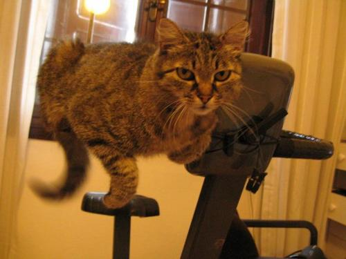 placeswheremycatshouldntbe:  on the cyclette