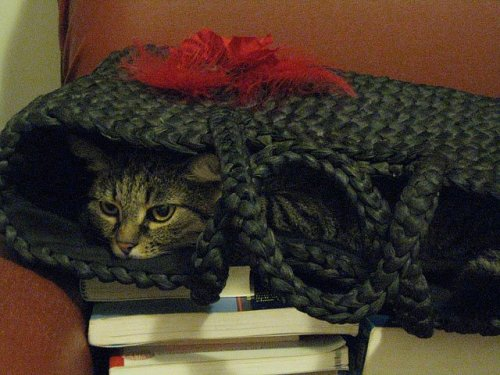 placeswheremycatshouldntbe:  sad, into the beach bag.