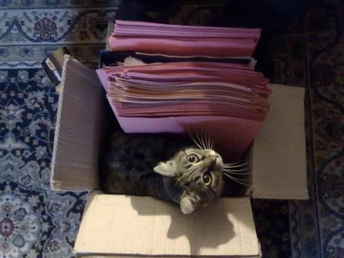 placeswheremycatshouldntbe:  where I put IMPORTANT files for work!