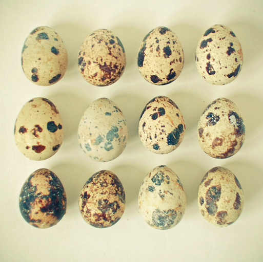 "catswithsocks:  Cassia Beck's ""Collections"" - 'Quail Eggs'"