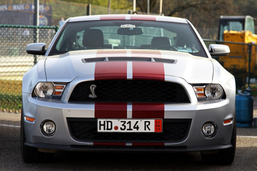 carpr0n:  Pet snake Starring: Shelby Mustang GT500 (by Philippe Collinet Photography)